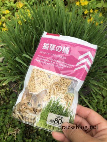 ダイソーの猫草の種