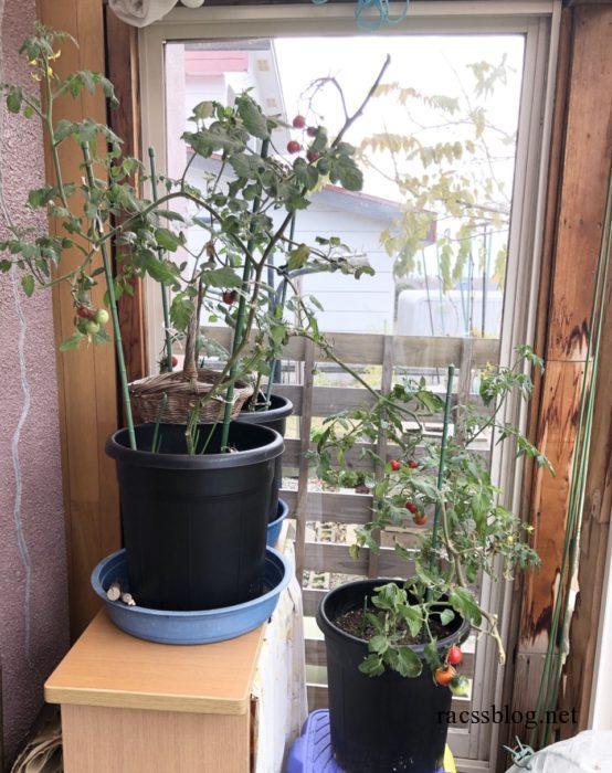 ミニトマトプランター栽培